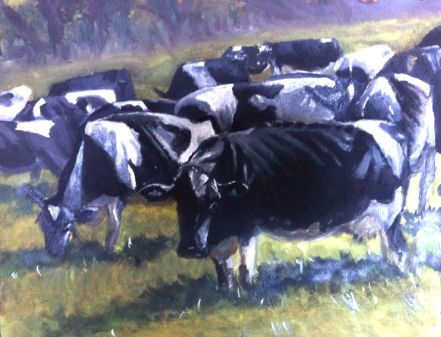 Cows oil