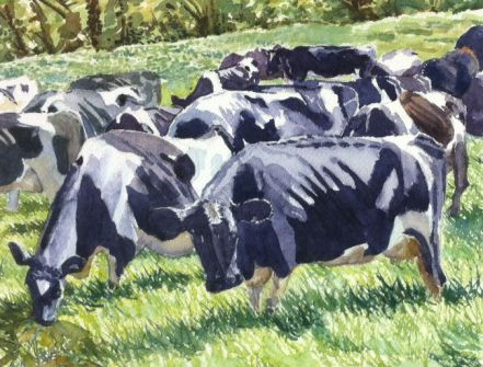 Cows watercolour